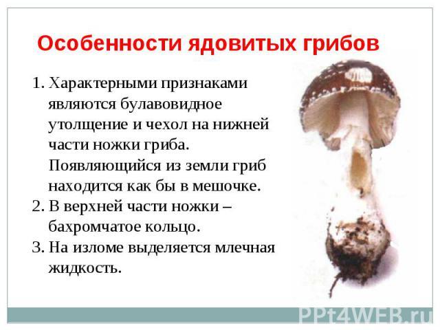 Характерными признаками являются булавовидное утолщение и чехол на нижней части ножки гриба. Появляющийся из земли гриб находится как бы в мешочке.В верхней части ножки – бахромчатое кольцо.На изломе выделяется млечная жидкость.