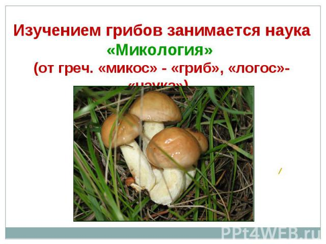 Изучением грибов занимается наука «Микология» (от греч. «микос» - «гриб», «логос»- «наука»).