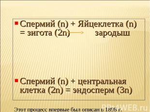 Спермий (n) + Яйцеклетка (n) = зигота (2n) зародыш Спермий (n) + центральная кле