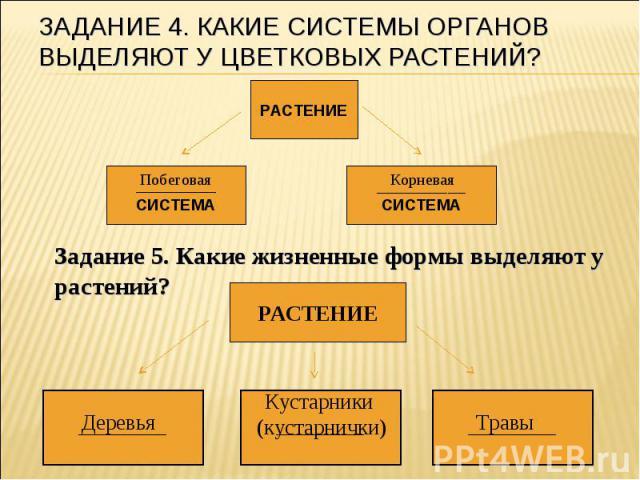 Задание 4. Какие системы органов выделяют у цветковых растений? Задание 5. Какие жизненные формы выделяют у растений?