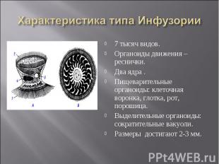 Характеристика типа Инфузории 7 тысяч видов.Органоиды движения – реснички.Два яд
