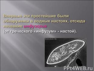 Впервые эти простейшие были обнаружены в водных настоях, отсюда название инфузор