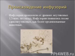 Происхождение инфузорий Инфузории произошли от древних жгутиковых 1,5 млн. лет н
