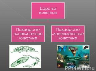 Царство животныеПодцарство одноклеточные животныеПодцарство многоклеточные живот