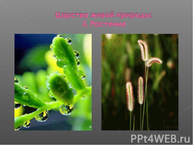 Царства живой природы:3. Растения