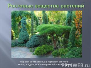 Ростовые вещества растений Обрезая ветви садовых и парковых растений, можно прид
