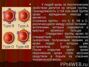 У людей кровь по биологическим свойствам делится на четыре группы. Принадлежност
