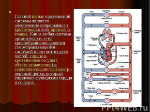 Главной целью кровеносной системы является обеспечение непрерывного кровотока во