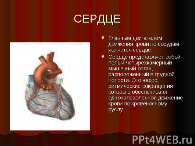 СЕРДЦЕ Главным двигателем движения крови по сосудам является сердце. Сердце представляет собой полый четырехкамерный мышечный орган, расположенный в грудной полости. Это насос, ритмические сокращения которого обеспечивают однонаправленное движение к…
