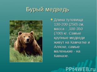 Бурый медведь Длина туловища 130-200 (250) см, масса - ,100-350 (700) кг. Самые