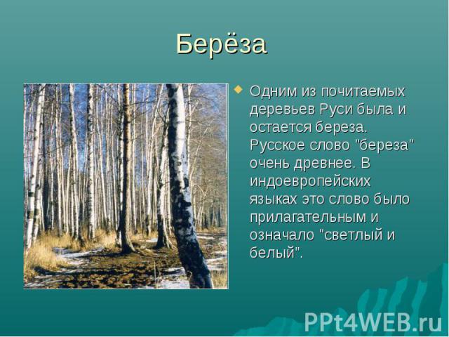 """Берёза Одним из почитаемых деревьев Руси была и остается береза. Русское слово """"береза"""" очень древнее. В индоевропейских языках это слово было прилагательным и означало """"светлый и белый""""."""