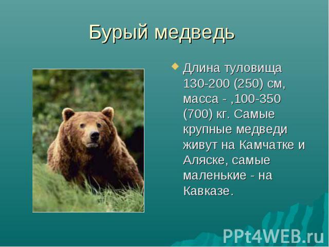 Бурый медведь Длина туловища 130-200 (250) см, масса - ,100-350 (700) кг. Самые крупные медведи живут на Камчатке и Аляске, самые маленькие - на Кавказе.
