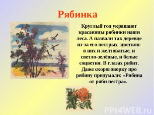 Рябинка Круглый год украшают красавицы рябинки наши леса. А назвали так деревце
