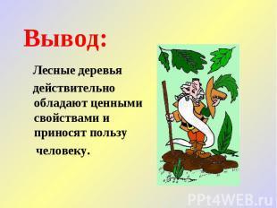 Вывод: Лесные деревья действительно обладают ценными свойствами и приносят польз