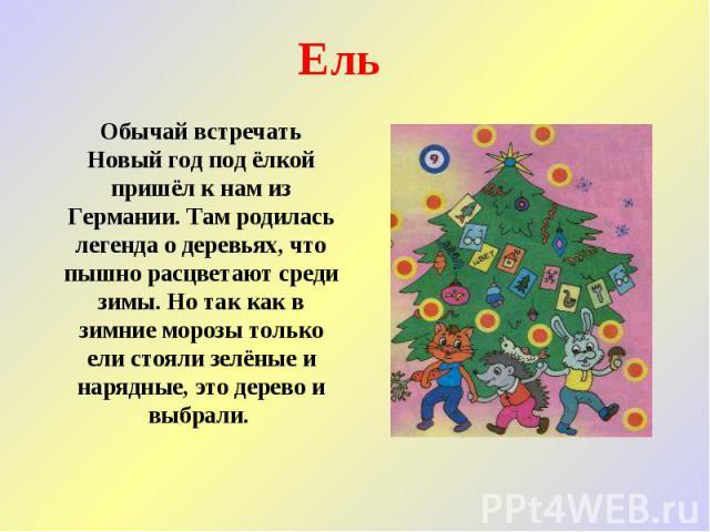 Ель Обычай встречать Новый год под ёлкой пришёл к нам из Германии. Там родилась легенда о деревьях, что пышно расцветают среди зимы. Но так как в зимние морозы только ели стояли зелёные и нарядные, это дерево и выбрали.