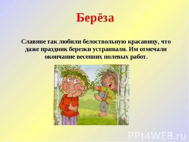 Берёза Славяне так любили белоствольную красавицу, что даже праздник березки устраивали. Им отмечали окончание весенних полевых работ.
