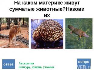 На каком материке живут сумчатые животные?Назови их вопрос ответ Австралия Кенгу