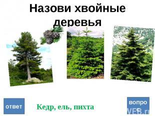 Назови хвойные деревья вопрос ответ Кедр, ель, пихта