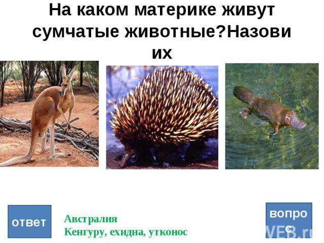 На каком материке живут сумчатые животные?Назови их вопрос ответ Австралия Кенгуру, ехидна, утконос