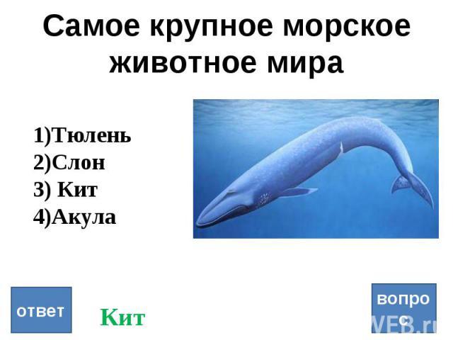 Самое крупное морское животное мира вопрос ответ Тюлень Слон Кит Акула Кит