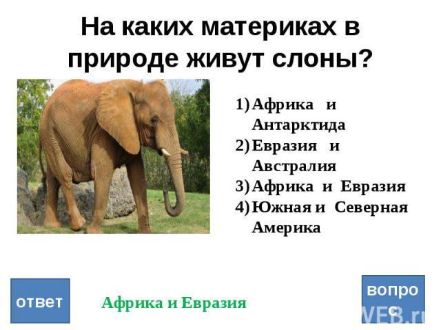 если слоны в южной америке наличии