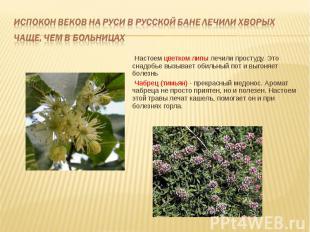 Настоем цветком липы лечили простуду. Это снадобье вызывает обильный пот и выгон
