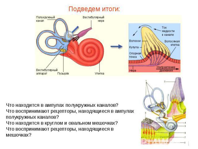 Подведем итоги: Что находится в ампулах полукружных каналов? Что воспринимают рецепторы, находящиеся в ампулах полукружных каналов? Что находится в круглом и овальном мешочках? Что воспринимают рецепторы, находящиеся в мешочках?