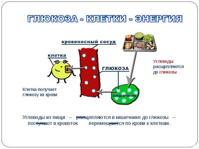 Углеводы из пищи – расщепляются в кишечнике до глюкозы – поступают в кровоток перемещаются по крови к клеткам. Клетка получает глюкозу из крови Углеводы расщепляются до глюкозы