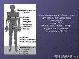 Смертельные поглощённые дозы для отдельных частей тела следующие: голова - 20 Гр