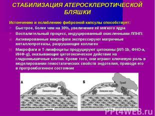 СТАБИЛИЗАЦИЯ АТЕРОСКЛЕРОТИЧЕСКОЙ БЛЯШКИ Истончению и ослаблению фиброзной капсул