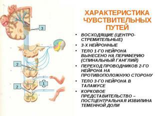 ХАРАКТЕРИСТИКА ЧУВСТВИТЕЛЬНЫХ ПУТЕЙ ВОСХОДЯЩИЕ (ЦЕНТРО-СТРЕМИТЕЛЬНЫЕ) 3-Х НЕЙРОН