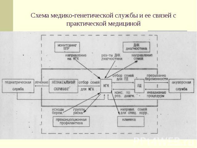 Схема медико-генетической службы и ее связей с практической медициной