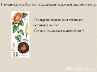 Биологические особенности выращивания подсолнечника, его значение - Где выращива