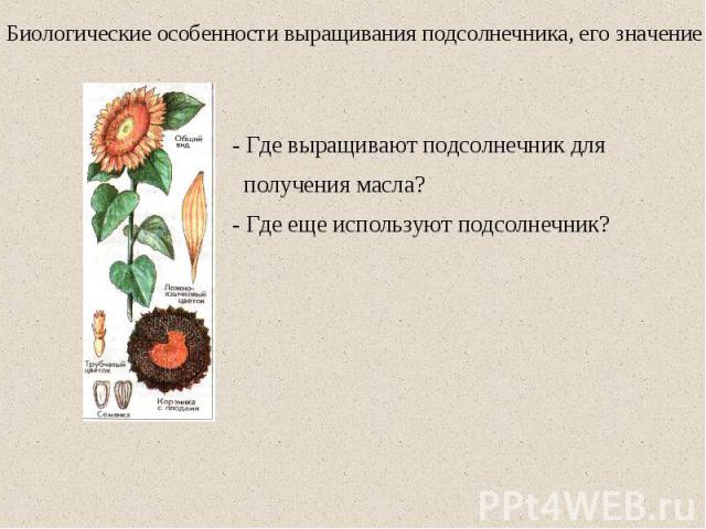 Биологические особенности выращивания подсолнечника, его значение - Где выращивают подсолнечник для получения масла? - Где еще используют подсолнечник?