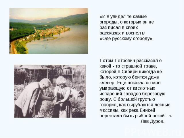 «И я увидел те самые огороды, о которых он не раз писал в своих рассказах и воспел в «Оде русскому огороду». Потом Петрович рассказал о какой - то страшной траве, которой в Сибири никогда не было, которую боится даже клевер. Еще показал он мне умира…