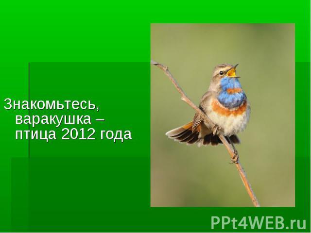 Знакомьтесь, варакушка – птица 2012 года
