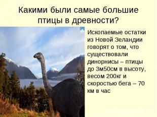 Какими были самые большие птицы в древности? Ископаемые остатки из Новой Зеланди