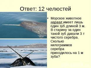 Ответ: 12 челюстей Морское животное нарвал имеет лишь один зуб длиной 3 м. В ста