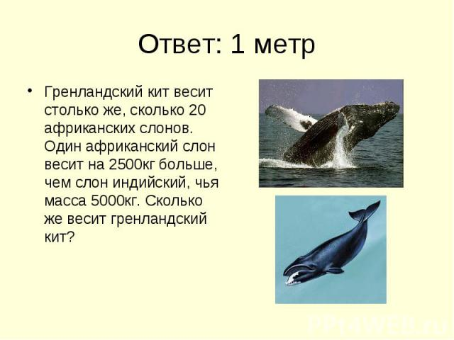 Ответ: 1 метр Гренландский кит весит столько же, сколько 20 африканских слонов. Один африканский слон весит на 2500кг больше, чем слон индийский, чья масса 5000кг. Сколько же весит гренландский кит?