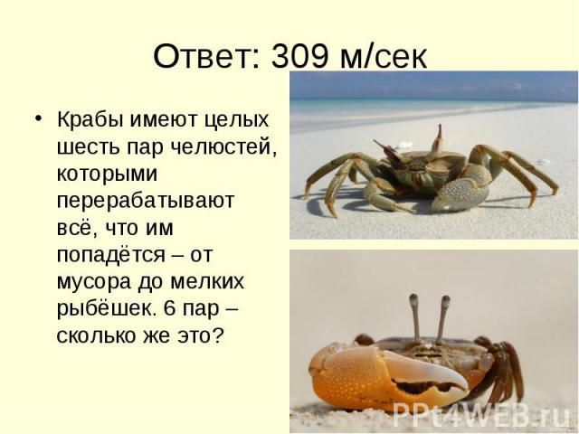 Ответ: 309 м/сек Крабы имеют целых шесть пар челюстей, которыми перерабатывают всё, что им попадётся – от мусора до мелких рыбёшек. 6 пар – сколько же это?