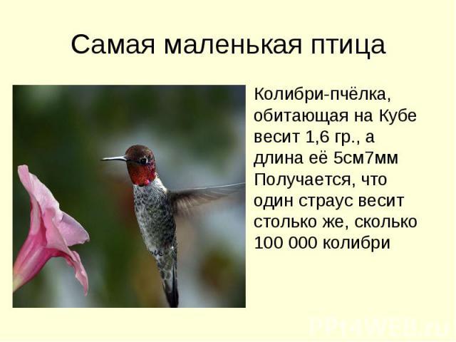 Самая маленькая птица Колибри-пчёлка, обитающая на Кубе весит 1,6 гр., а длина её 5см7мм Получается, что один страус весит столько же, сколько 100 000 колибри