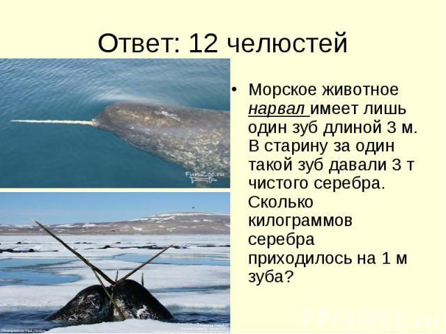 Ответ: 12 челюстей Морское животное нарвал имеет лишь один зуб длиной 3 м. В старину за один такой зуб давали 3 т чистого серебра. Сколько килограммов серебра приходилось на 1 м зуба?
