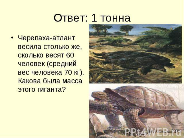 Ответ: 1 тонна Черепаха-атлант весила столько же, сколько весят 60 человек (средний вес человека 70 кг). Какова была масса этого гиганта?