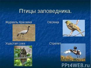 Журавль Красавка Овсянка Ушастая сова Стрепет Птицы заповедника.