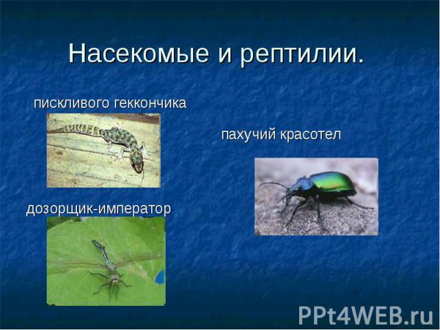 пискливого геккончика дозорщик-император пахучий красотел Насекомые и рептилии.