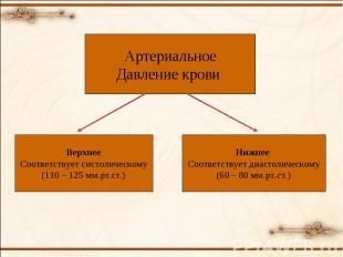 Артериальное Давление крови Верхнее Соответствует систолическому (110 – 125 мм.р