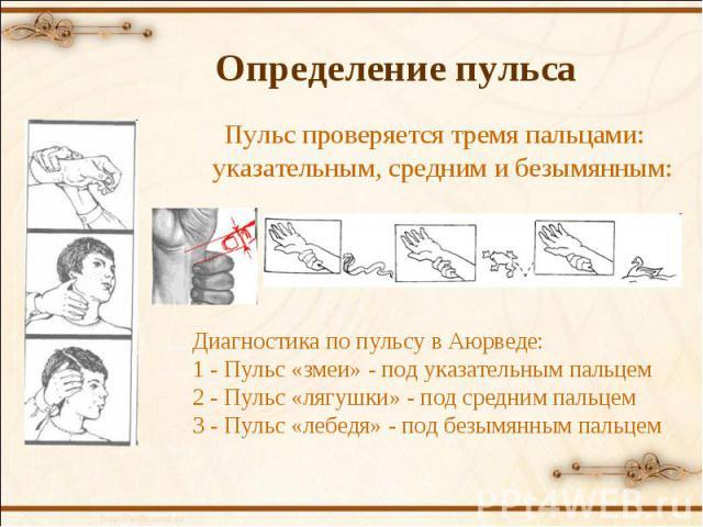 Пульс проверяется тремя пальцами: указательным, средним и безымянным: Диагностика по пульсу в Аюрведе: 1 - Пульс «змеи» - под указательным пальцем 2 - Пульс «лягушки» - под средним пальцем 3 - Пульс «лебедя» - под безымянным пальцем Определение пульса