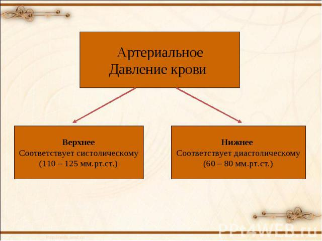 Артериальное Давление крови Верхнее Соответствует систолическому (110 – 125 мм.рт.ст.) Нижнее Соответствует диастолическому (60 – 80 мм.рт.ст.)