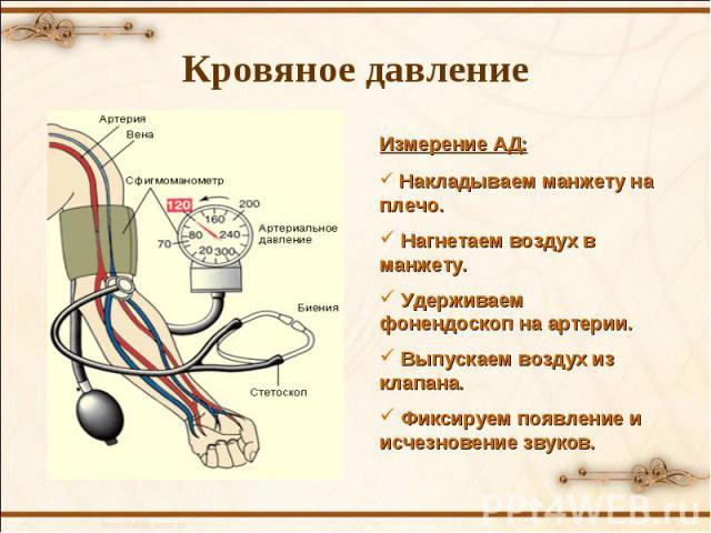 Измерение АД: Накладываем манжету на плечо. Нагнетаем воздух в манжету. Удерживаем фонендоскоп на артерии. Выпускаем воздух из клапана. Фиксируем появление и исчезновение звуков. Кровяное давление