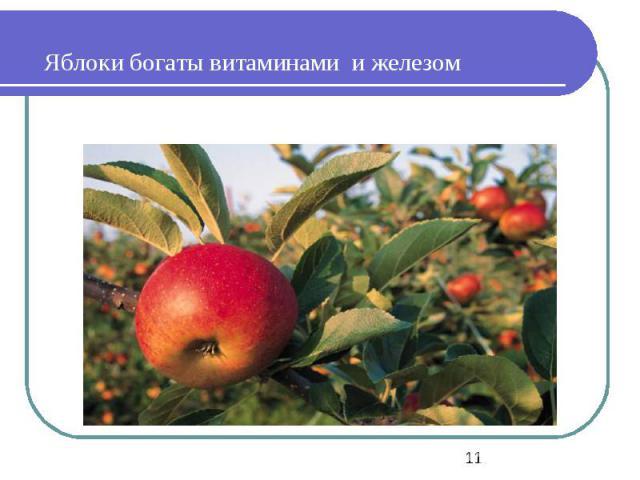 Яблоки богаты витаминами и железом